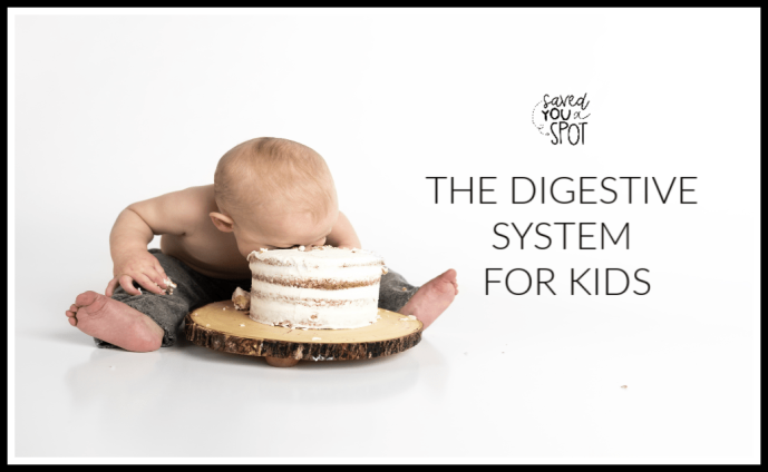 The Digestive System for Kids